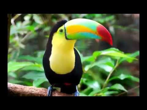 Belize Zoo Day Tours