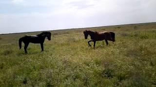 Qızğın At davası