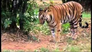 Your Videos  My Travel   Wildlife Showreel (6).mp4