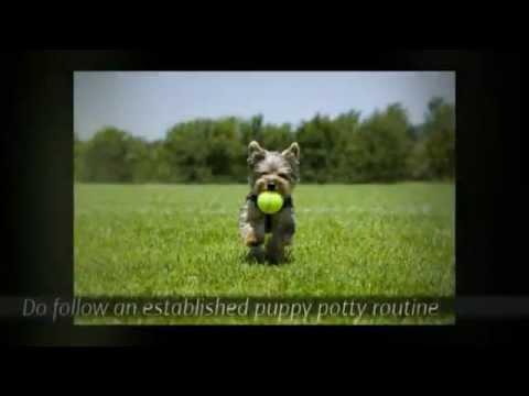 victoria-stilwell-puppy-training-tips-|-puppy-potty-training-tips-|-tips-for-potty-training-a-puppy