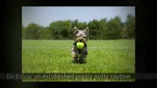Victoria Stilwell Puppy Training Tips | Puppy Potty Training Tips | Tips For Potty Training A Puppy