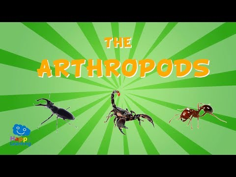 The Arthropods | Educational Video for Kids.