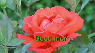 Good morning video song hindi