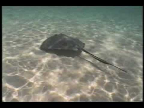 Stingray City, Grand Cayman, a fun place to visit.