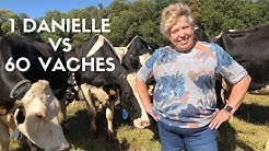 DANIELLE VS 60 VACHES