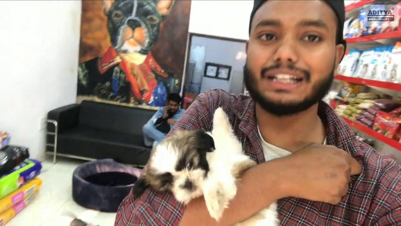 CHEAPEST PRICE IN INDIA // Pomeranian, PITBULL, Lebrador  ....