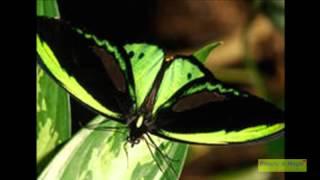 Самые красивые бабочки!