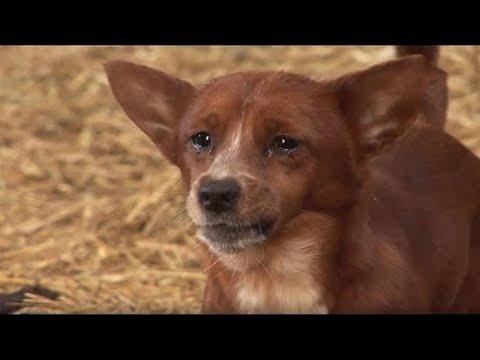 كلب يبكي بسبب فراق صديقه  - نشر قبل 34 دقيقة