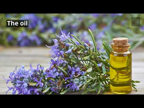 13-amazing-benefits-of-rosemary-essential-oil.