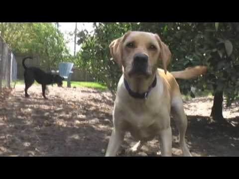 Youtube Dogs Barking Howling