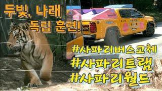 [에버랜드 호랑이] 2…
