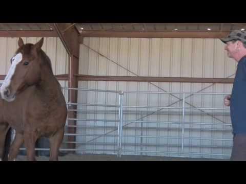 Wild Horse Empowerment - Rick Allen and Lauren Mon...