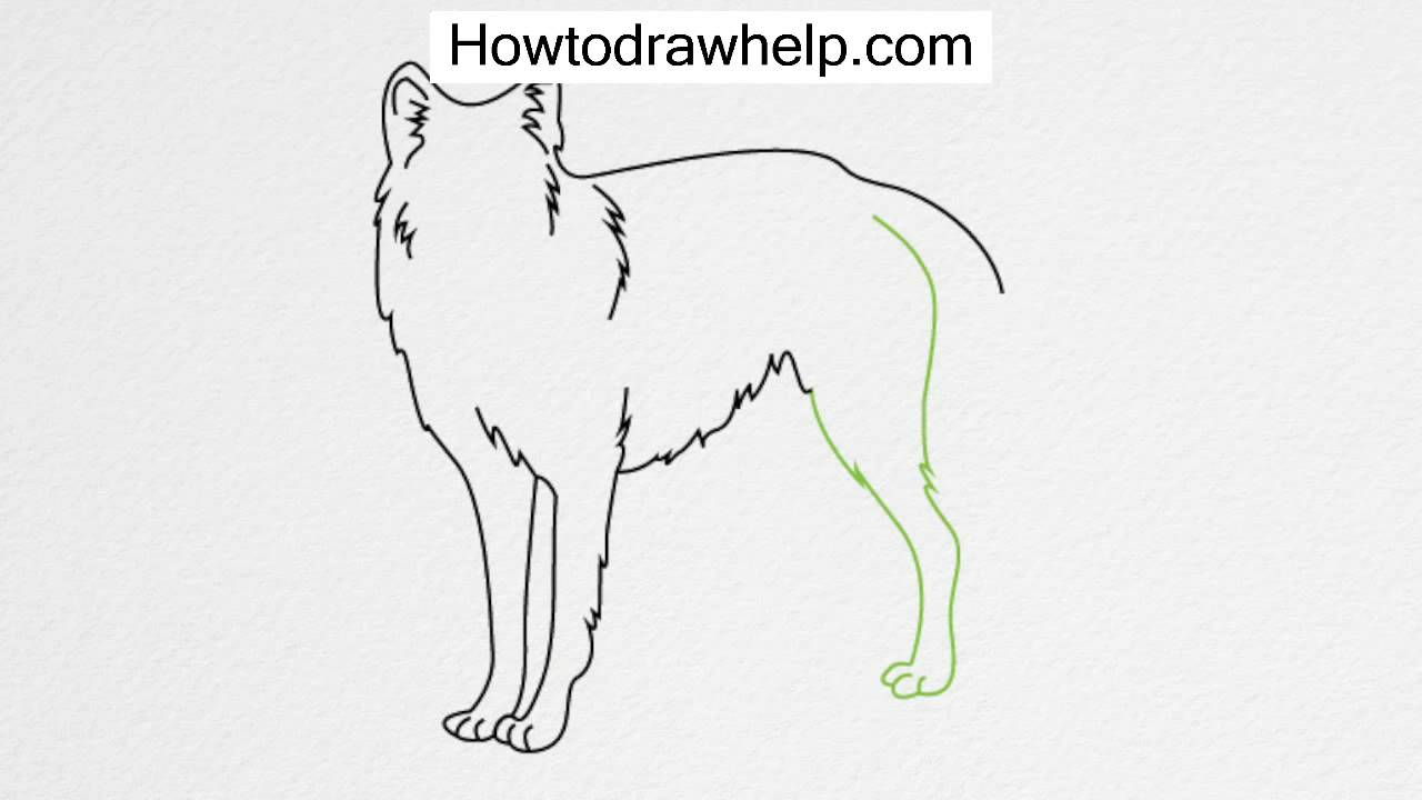 How To Draw A Wolf Step By Step For Kids