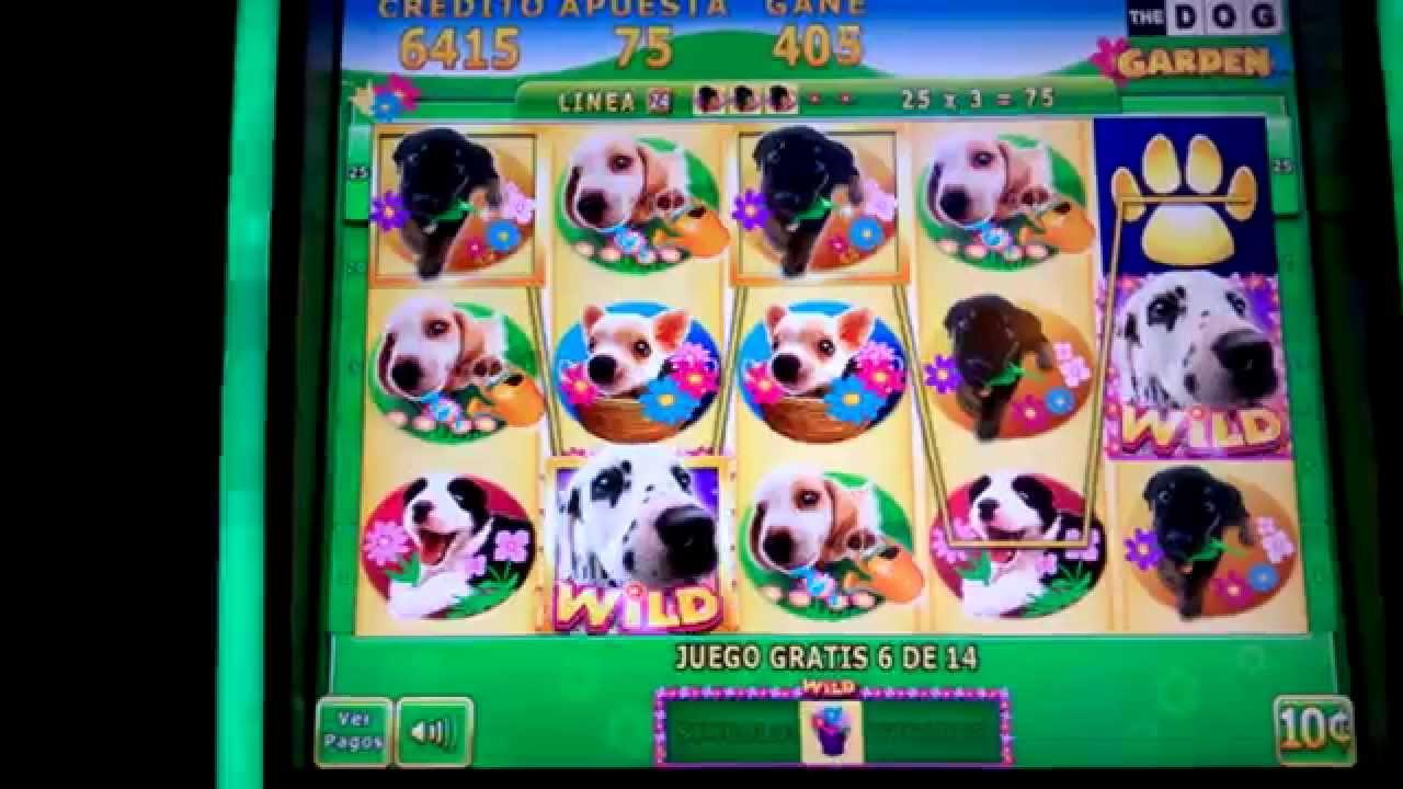 Doggie cash slot machine online
