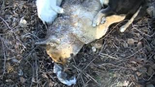 В Федино обнаружена большая свалка трупов собак