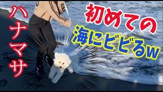 ハナマサ初海にビビりまくる!!〜ジェイたちとドッグランと共に〜