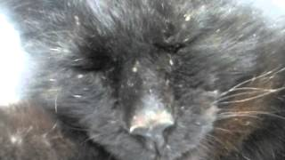 Кот разорвет