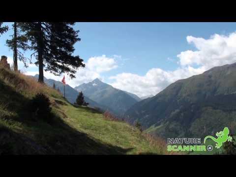 Val Medel en de Soliva | Wandelen in Graubunden