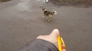 инструмент для отпугивания собак