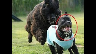 Funny and Cute Dogs video compilation 2018 | Funny Pet Videos