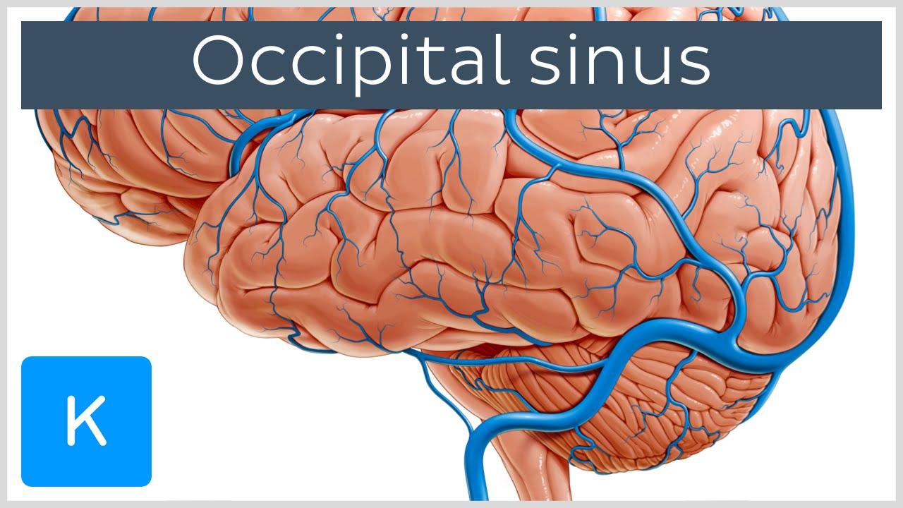 Occipital Sinus (sinus occipitalis) - Human Anatomy | Kenhub - YouTube