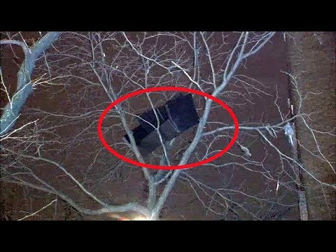 Dave Hill - New York Tries to Figure Out How Couch Ended Up In A Tree