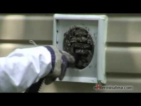 Wasps In Home Vent Youtube