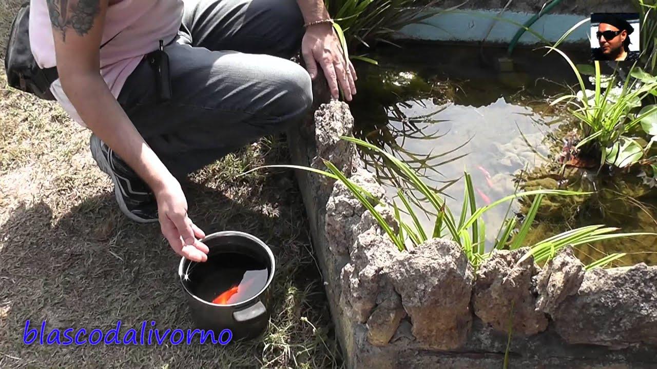 Pesci rossi dall 39 acquario al paradiso youtube for Filtro vasca pesci rossi