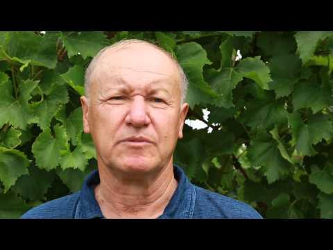 Видео Как вырастить виноград из косточки
