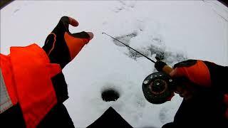 Ešerių žvejyba balansyru žiema.Oкунь на балансир зимой