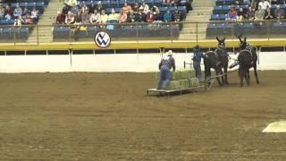mules vs horses 2