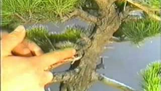 The World of Bonsai Master Masahiko Kimura part 1.flv