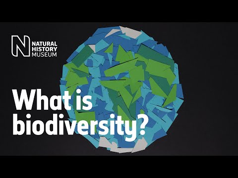 What is biodiversity? | Natural History Museum