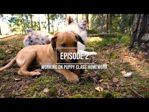 DOG VLOG • EPISODE 2 • LUCKY´S FIRST PUPPY CLASS HOMEWORK