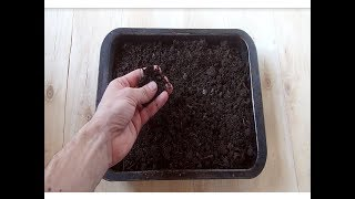 Подготовка к посеву рассады / Подготовка почвы к высадке семян на рассаду