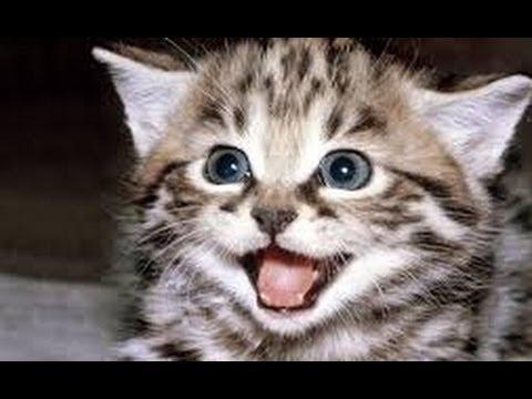 Sunete Pisica Amuzant Și Drăguț - Compilatie