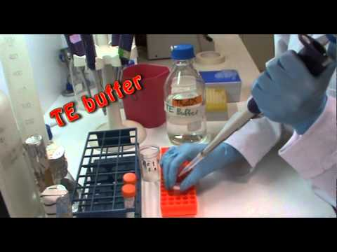 DNA extraction in the lab