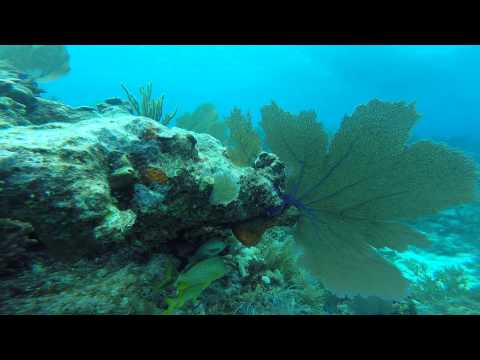 Shipwreck and Molasses Reef