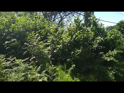 Участок 5 соток -1 800 000 руб- Адлер--село Орёл-Изумруд, улица Лазурная Долина, 201