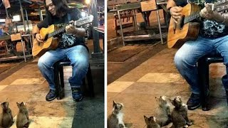 Ignored street singer is about to give up, looks down and sees the most adorable crowd ever