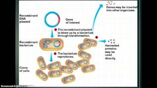 Biotechnology - Cloning & Genetic Engineering
