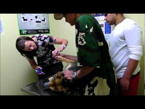 Veterinarian Dog Aggression - DOG INTERVENTION Dog Whispering BIG CHUCK MCBRIDE