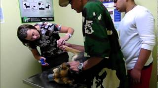 Veterinarian Dog Aggression - Dog Intervention Dog Whispering Big Chuck Mcbride