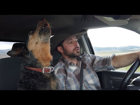 My Dog Sings Country Music, Can You Guess Her Favorite Song?