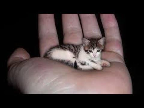 TOP 10 MOST EXPENSIVE CAT BREED IN THE WORLD