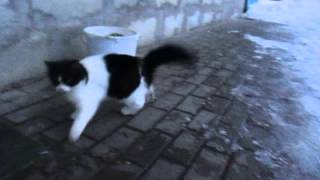 Черно-белая кошка отжигает:)