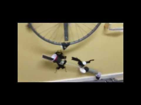 Rube Goldberg Machine - Sant Bani School Style