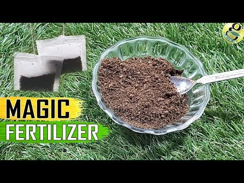 TEA WASTE FOR PLANTS: Used Tea Bags Coffee Grounds for Plants | Homemade Organic Fertilizer for Rose