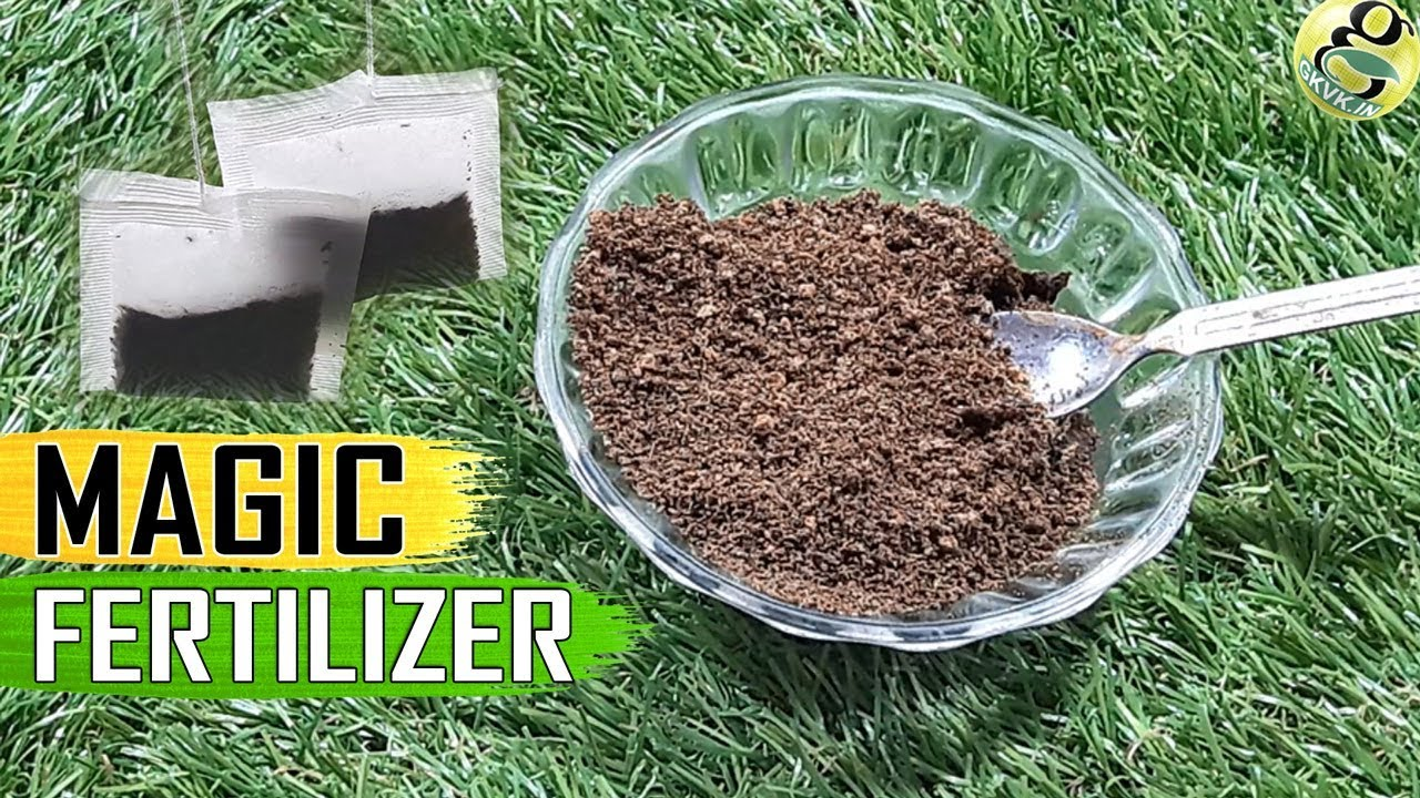 Tea Waste Fertilizer Used Tea Bags Coffee Grounds For