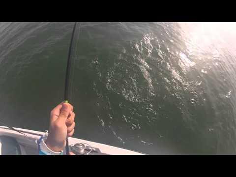 PANAMA CITY CANAL PEACOCK BASS FISHING